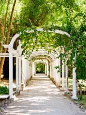Rio, Brazil - Botanic Garden Pergola