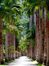 Rio, Brazil - Botanic Garden Tree Path