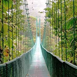 Biology students can explore the forest canopy using the tree top suspension bridges of the Sky Walk in Monteverde Cloud Forest.