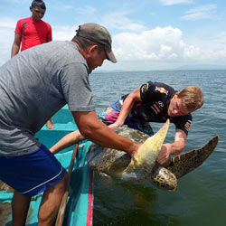 Science students get hands-on-experience working in wildlife conservation with endangered sea turtles in Central America.