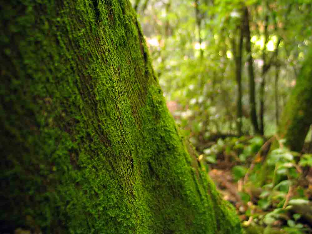 Mossy forest ecology walk in New Zealand.