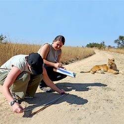 Students participating in a service-learning project at a wildlife reserve for African lions in Zimbabwe.