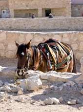 Jordan_Perta_horse_web.jpg