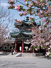 China_Beijing_Spring