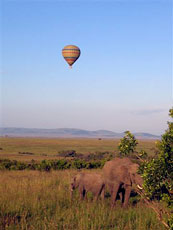 Africa_Ballon-&-Elephants